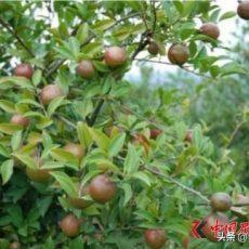 助力扶贫 九展为茶油产业发展提供精准范本